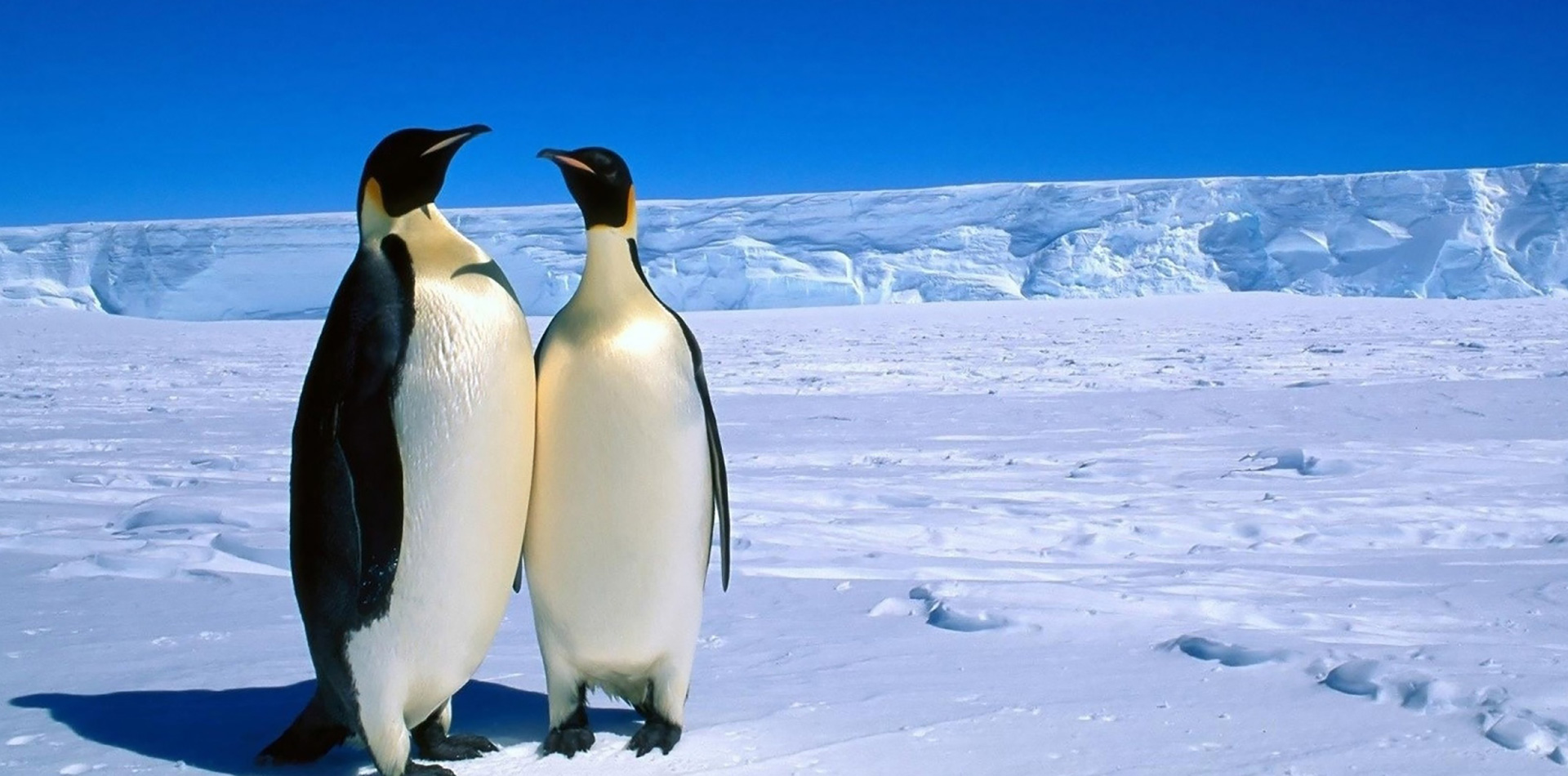SICK's 3D LiDAR Helps Scientists Count Penguins with Drones in Antarctica